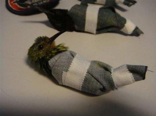 The Weirdest Way to Smuggle Hummingbirds