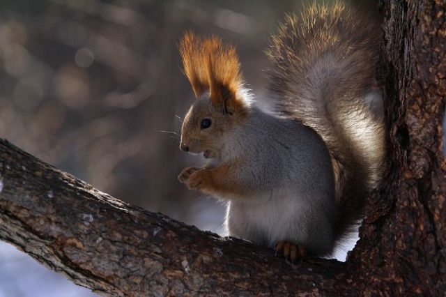 Frantic Squirrel Photography