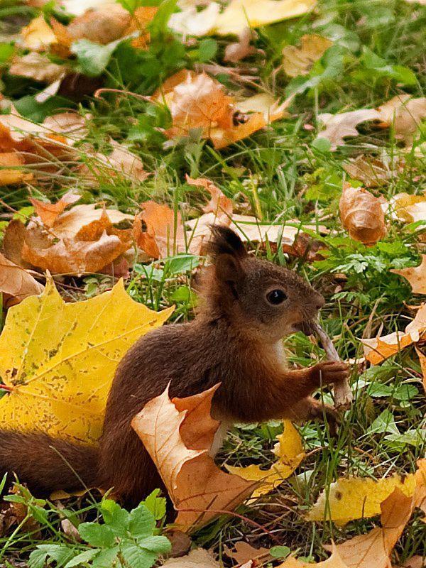 Frantic Squirrel Photography