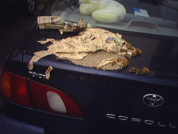 Car Revenge