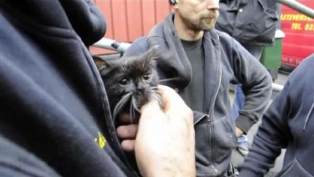 Saving-a-kitten Operation in Sweden