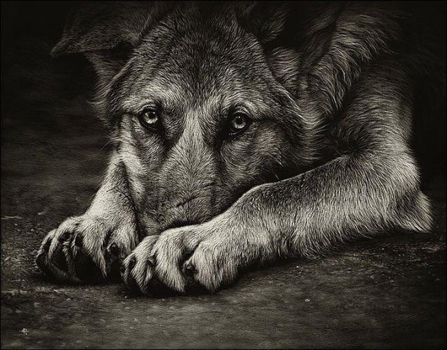 Stunning Life Like Animal Drawings