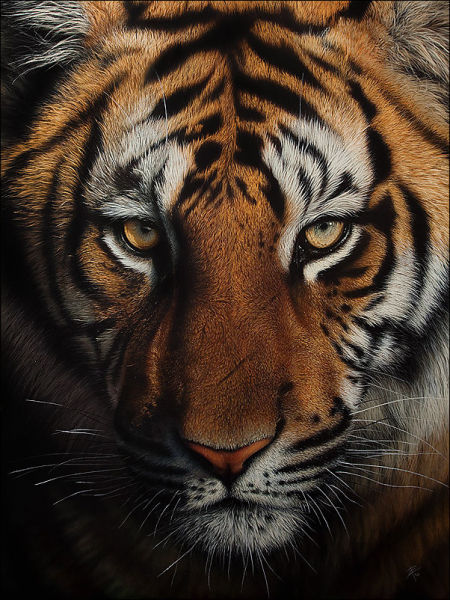 Stunning Life Like Animal Drawings