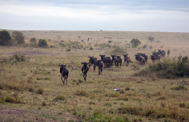 Amazing Wild Antelope Rescue