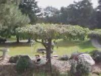 Dog Climbs Tree to Get the Stick