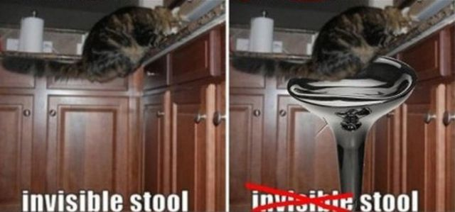 We Finally Can See Invisible Cat Activities