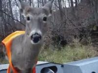 Deer Chills with Hunters