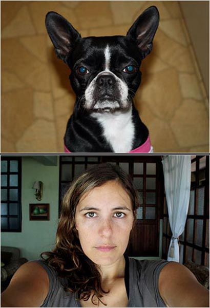 The Resemblance of Dog Owners and Their Dogs