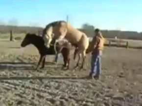 Male Horse Has Sex for 1st Time, Passes Out!
