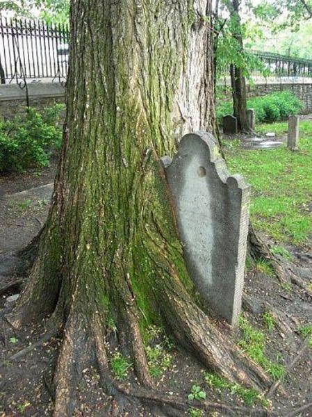 Spooky Looking Trees