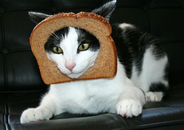 Funny Selection of 'Inbread' Animals