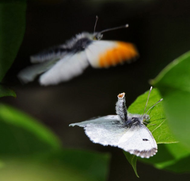The Best Wildlife Photos for 2011