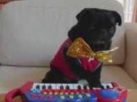Keyboard Pug