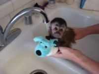 It's Bath Time for Cute Baby Monkey