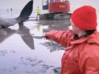 Now, That's a Whale Enthusiast!