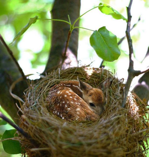 Lucu dan Unyunya Bayi-Bayi Hewan Ini