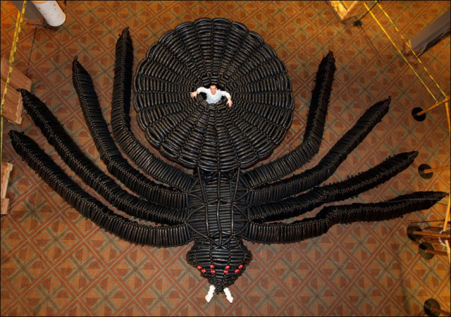 The Largest Modelling Balloon Spider in the World (8 pics ...