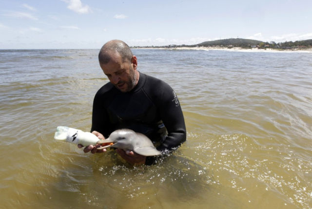 Endless Cuteness: A Man Nursing a Little Dolphin