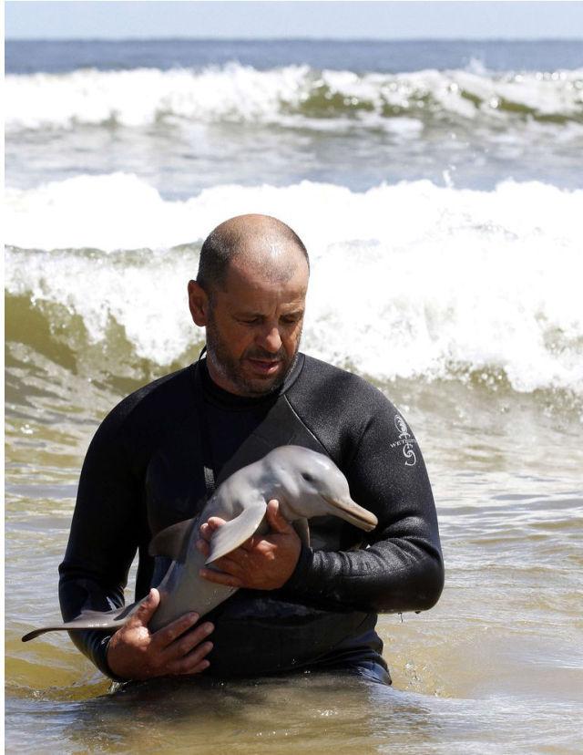 Endless Cuteness: A Man Nursing a Little Dolphin
