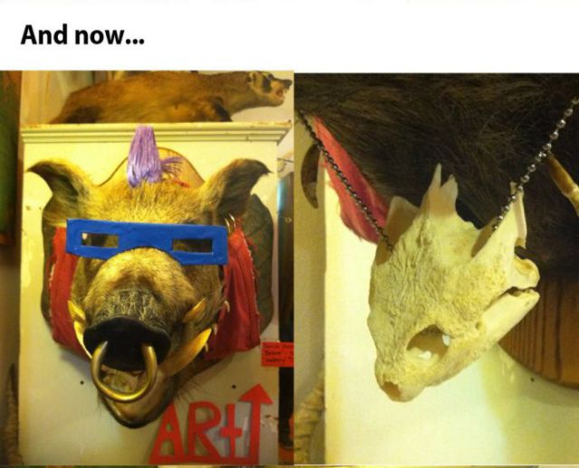 Taxidermy of Bebop