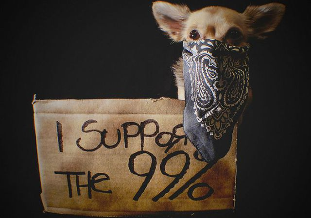 Occupy Wall Street Dog Protestors
