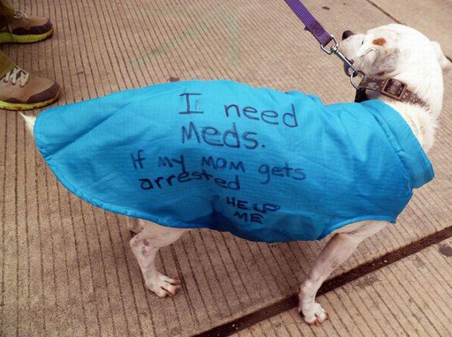 Occupy Wall Street Dog Protestors