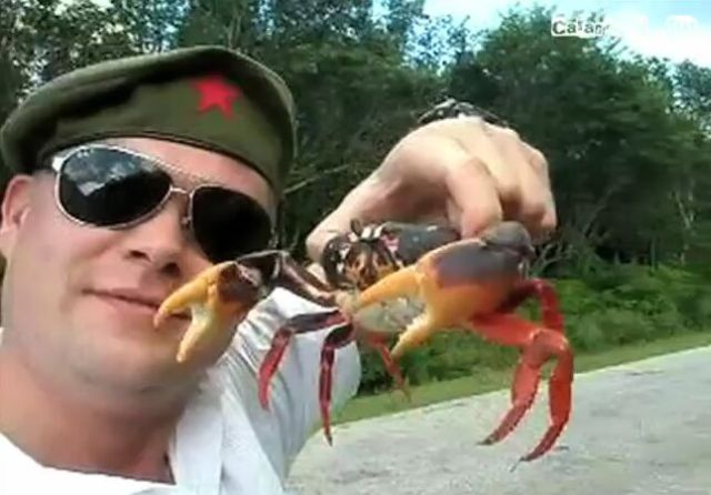 Why You Shouldn't Mess with a Crab