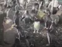 Penguins Chasing Bubbles