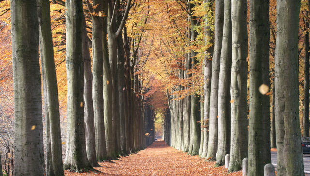 Awe-Inspiring Nature Pictures