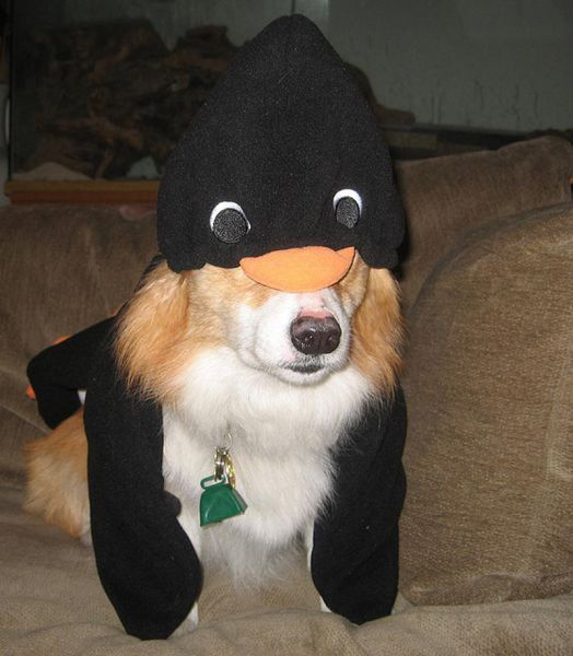 The Only Cute Corgi Halloween Costume Post