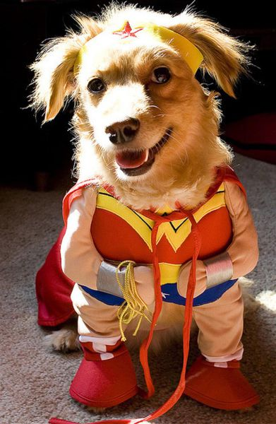 The Only Cute Corgi Halloween Costume Post 90 Pics