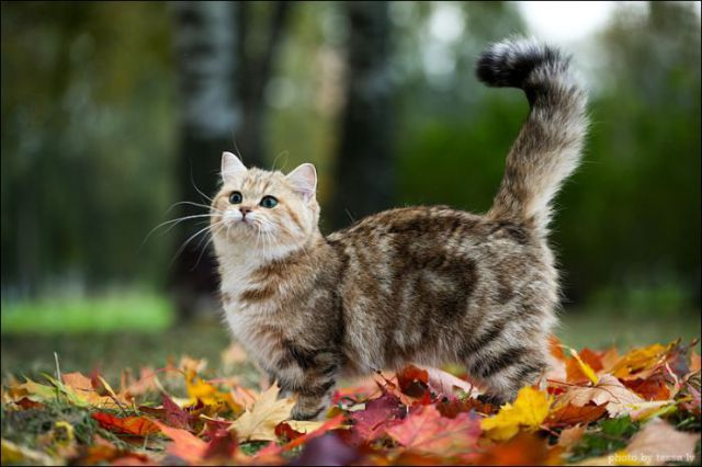 A Kitty You will Fall in Love With
