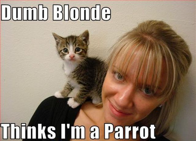 It's Funny When Blondes Fail