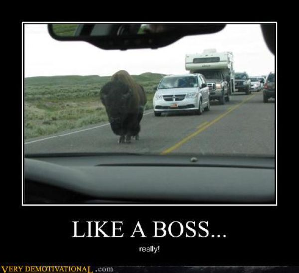 Like a Boss. Part 2