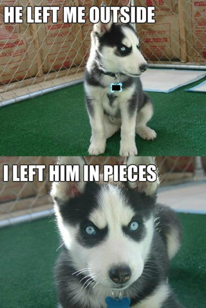 The Best of the Insanity Puppy Meme