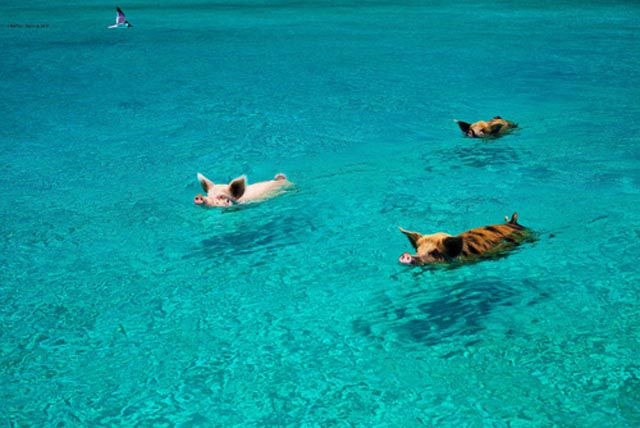 Unforgettable Bahamas Vacation