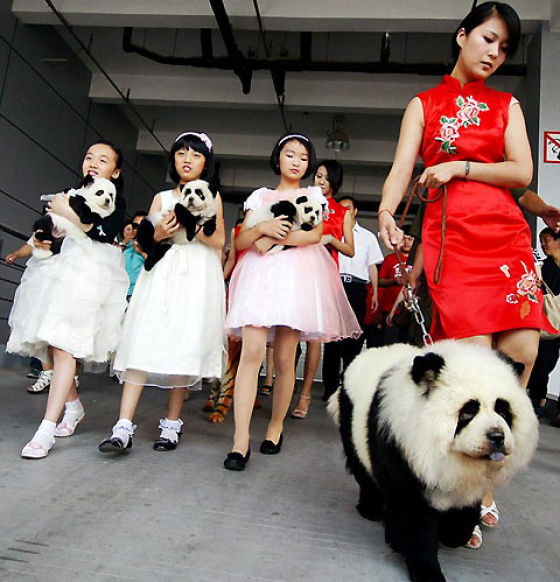 latest craze in China