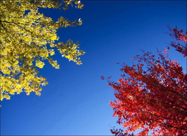 Beautiful Fall in Photos