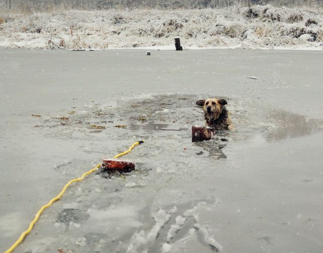 Amazing Ice Cold Dog Rescue