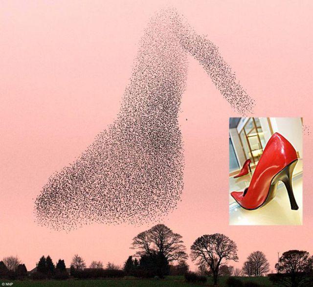 Starlings Dancing in the Skies of Scotland