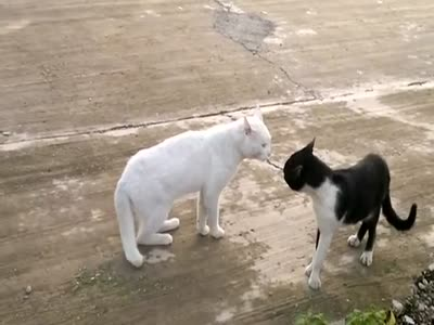Angry Cat Masters the Cobra-Cat Fighting Style