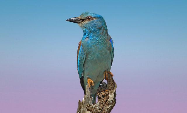 Beautiful Birds of the World