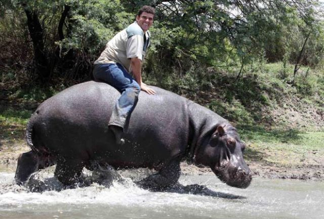 Pet Hippo Kills His Owner