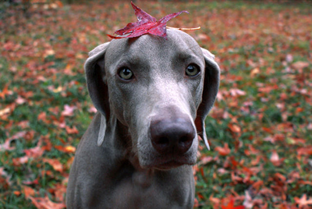 How Dogs Play in Leaves