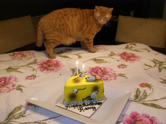 Happy Birthday, Cats!