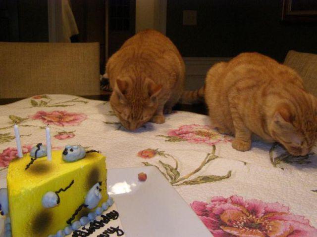 Happy Birthday, Cats!