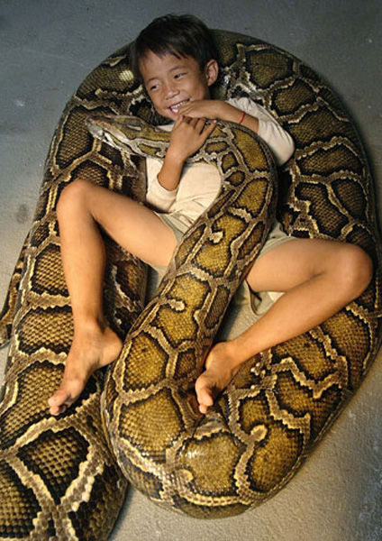 16-Foot Python Little Boy's Best Friend