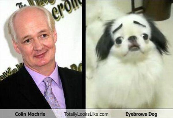 Funny Look-Alikes