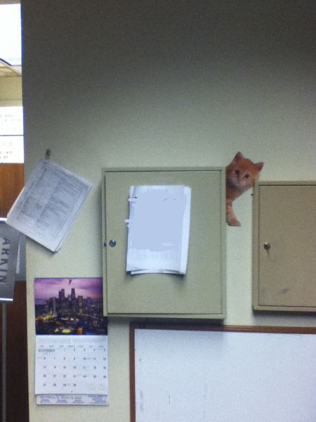 Trolling in the Office - Cute Kittens