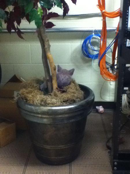 Trolling in the Office - Cute Kittens
